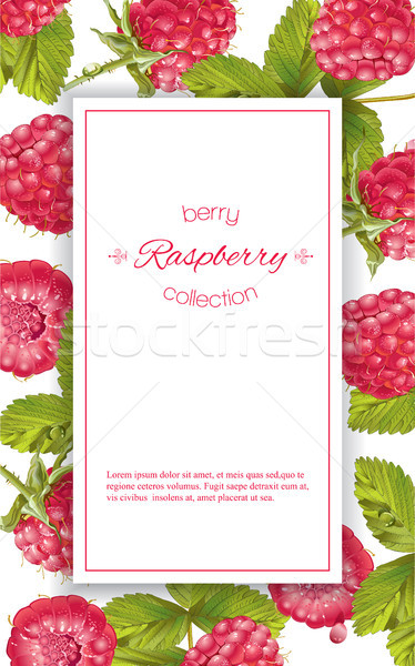 Raspberry vertical banner Stock photo © PurpleBird