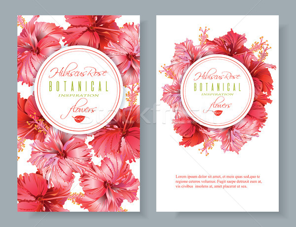 Hibiscus flower banners Stock photo © PurpleBird