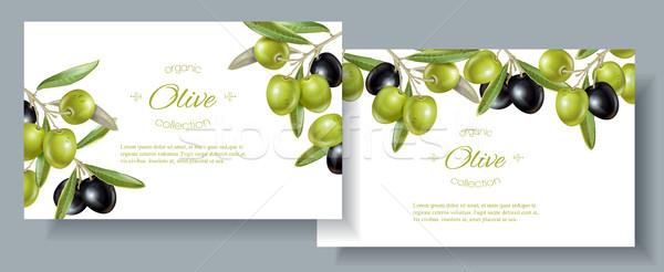 De oliva horizontal banners vector maduro negro Foto stock © PurpleBird