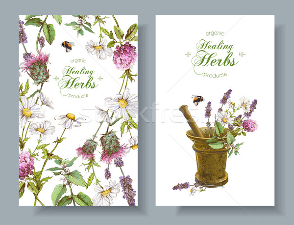 Vector herbal banners Stock photo © PurpleBird