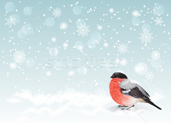 Christmas bullfinch background Stock photo © PurpleBird