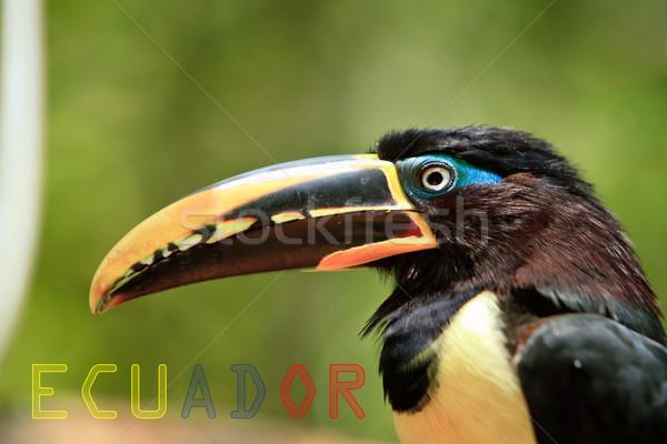 Afiş Ekvador renkler bayrak göz doğa Stok fotoğraf © pxhidalgo