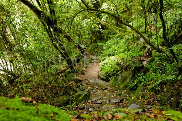 Tropikal rainforest yol orman Ekvador ahşap Stok fotoğraf © pxhidalgo