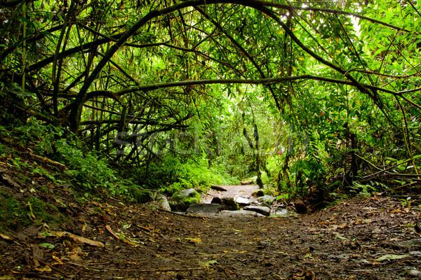 Tropikal rainforest orman Ekvador ahşap orman Stok fotoğraf © pxhidalgo