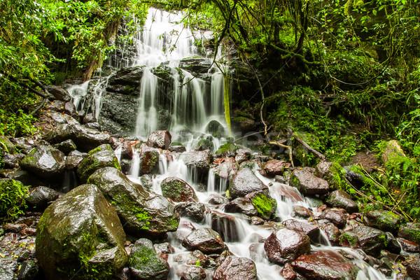Cascade falls over mossy rocks Stock photo © pxhidalgo