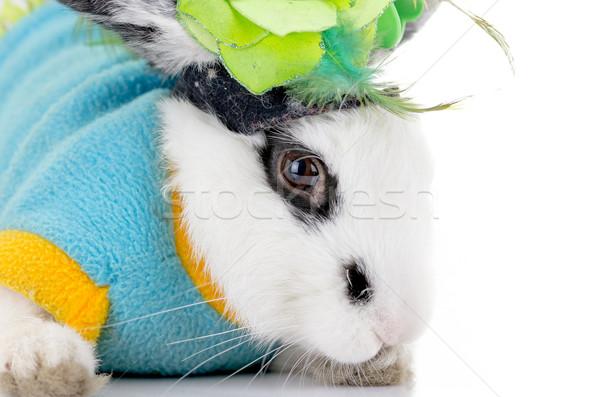 Biały dalmatyński królik czarny Wielkanoc Zdjęcia stock © pxhidalgo