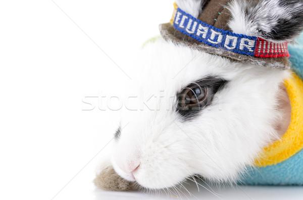 Black and white rabbit with an Ecuador bandana Stock photo © pxhidalgo