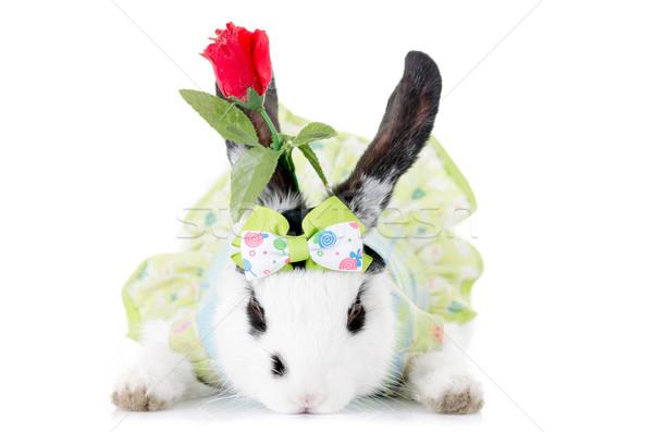 小 ウサギ ドレス 花 孤立した 白 ストックフォト © pxhidalgo