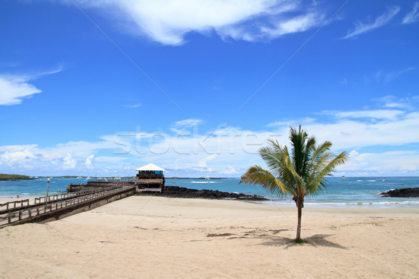 beach of the Galapagos Islands Stock photo © pxhidalgo