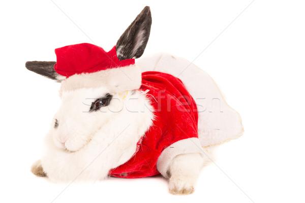 Rabbit with christmas costume Stock photo © pxhidalgo