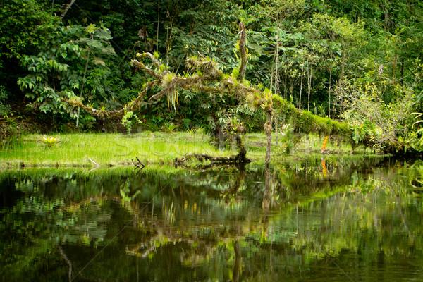 Rainforest rzeki drzewo dżungli trawy Zdjęcia stock © pxhidalgo