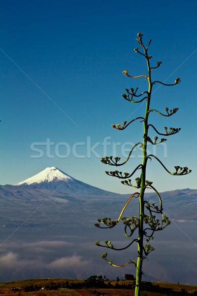 Cotopaxi volcano, Ecuador. Stock photo © pxhidalgo