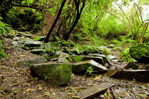 Esőerdő sáros út esőerdő fák víz Stock fotó © pxhidalgo
