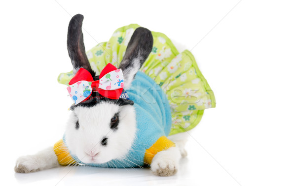 funny rabbit with green dress and bow Stock photo © pxhidalgo