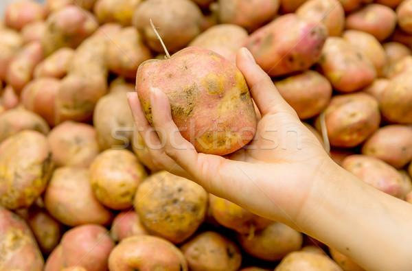 fresh organic Potatoes in a market, Quito Ecuador Stock photo © pxhidalgo