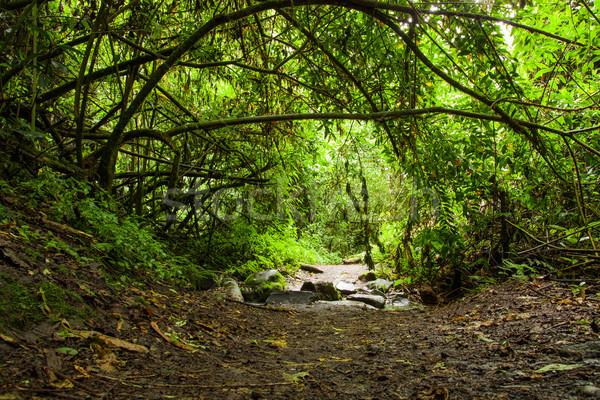 Tropical Rainforest Landscape, Ecuador Stock photo © pxhidalgo