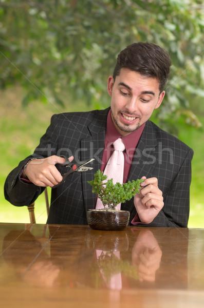Man is trimming a bonsai tree Stock photo © pxhidalgo