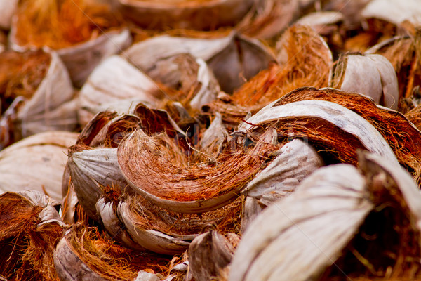 Coconut shells, member of the family Arecaceae Stock photo © pxhidalgo