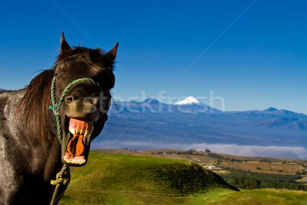 Face Horse Stock photo © pxhidalgo