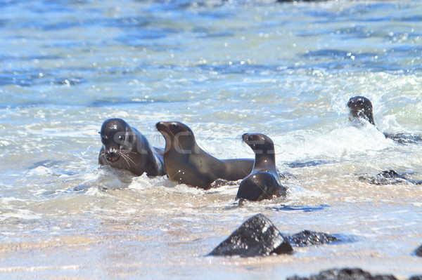 Sea Lion family Stock photo © pxhidalgo