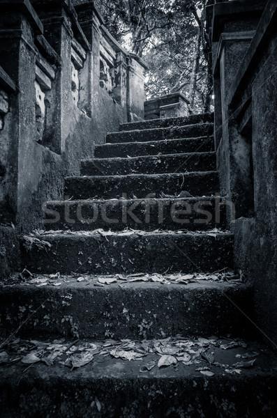 Stock fotó: Ijesztő · kő · lépcsősor · fa · fa