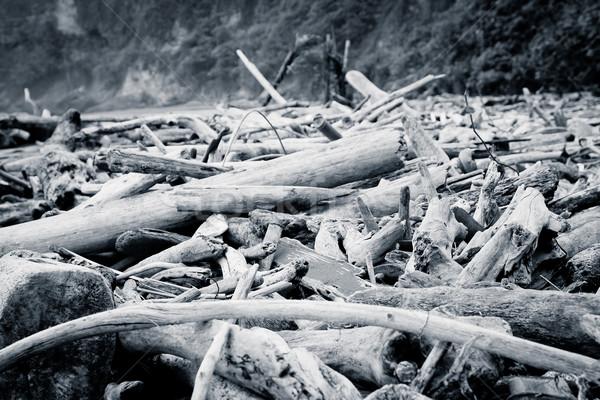 Troncos para cima praia cor água árvore Foto stock © pxhidalgo