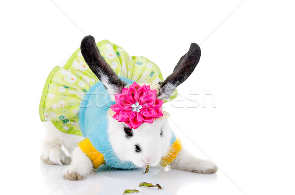 small rabbit IN A DRESS with flower Stock photo © pxhidalgo