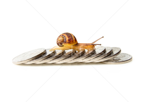 Stock photo: road to wealth, Snail crossing over shiny coins