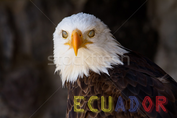 Portrait, bald eagle with banner of Ecuador Stock photo © pxhidalgo