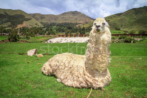 Portret boerderij hemel gezicht natuur reizen Stockfoto © pxhidalgo