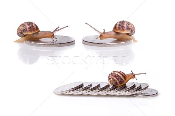 snail on money set Stock photo © pxhidalgo