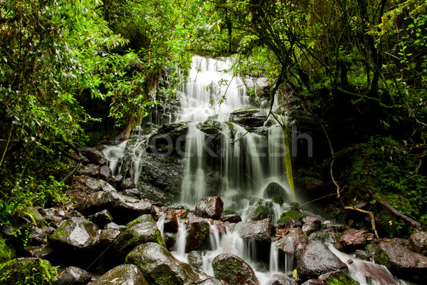 Jungle Waterfall Stock photo © pxhidalgo