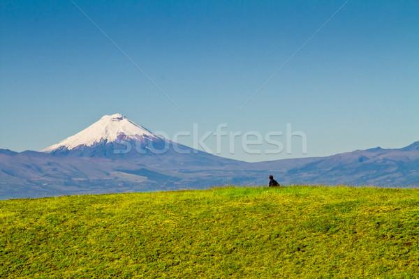 Vulkán Ecuador tájkép felvidék fa város Stock fotó © pxhidalgo