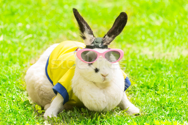 rabbit wearing Sunglasses in the park Stock photo © pxhidalgo
