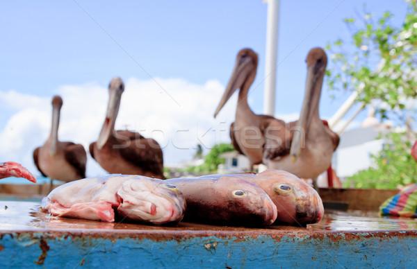 Stock fotó: Vár · hal · piac · ebéd · étel · madár