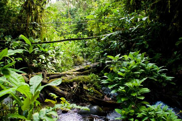 Foresta pluviale amazon giungla stream ponte acqua Foto d'archivio © pxhidalgo