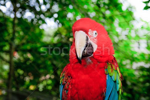 Rot Kopf Auge Ozean Vogel Stock foto © pxhidalgo
