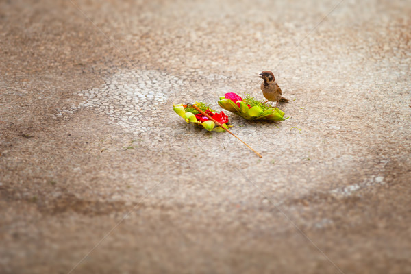 Little Sparrow, Stealing Food from an Offering to the Gods Stock photo © pzaxe