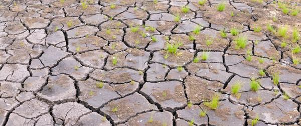 Felület föld repedt háttér nyár padló Stock fotó © pzaxe