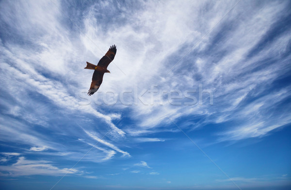 Zwarte Kite Blauw bewolkt hemel vogel Stockfoto © pzaxe