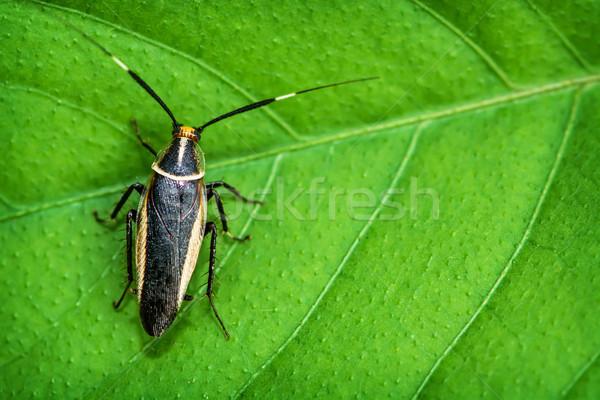Tropicales cucaracha hoja planta primer plano Foto stock © pzaxe