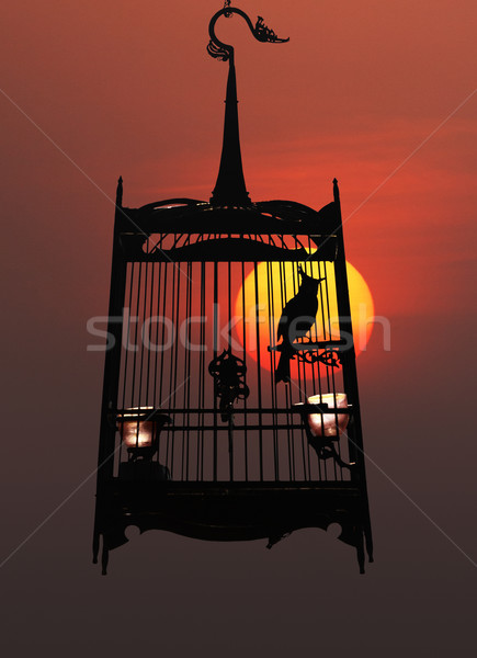 Singing bird in cage, against the setting sun Stock photo © pzaxe