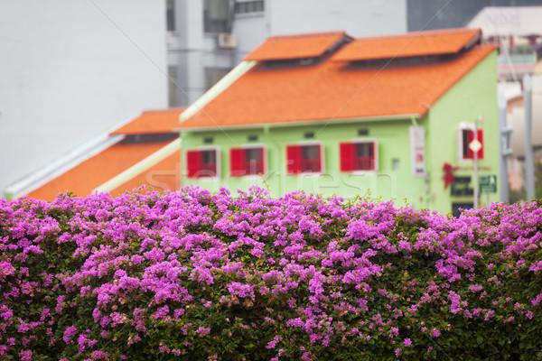 Architektury Singapur kwiaty pierwszy plan budynku ogród Zdjęcia stock © pzaxe