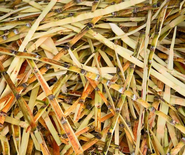 Odpadów cukru produkcji cukier trzcinowy charakter zielone Zdjęcia stock © pzaxe