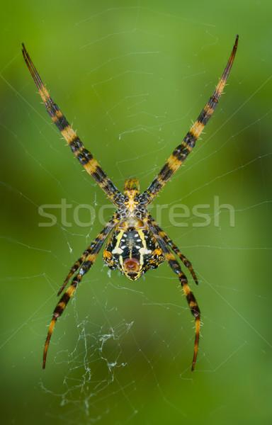 Araignée web inférieur vue Thaïlande phuket Photo stock © pzaxe