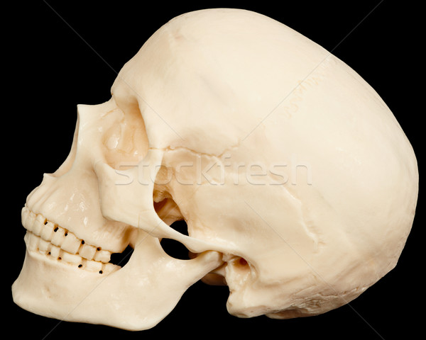 Human skull on black background in profile Stock photo © pzaxe