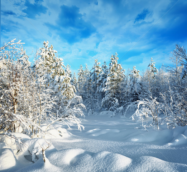 Trees in winter forest covered with hoarfrost and snow Stock photo © pzaxe
