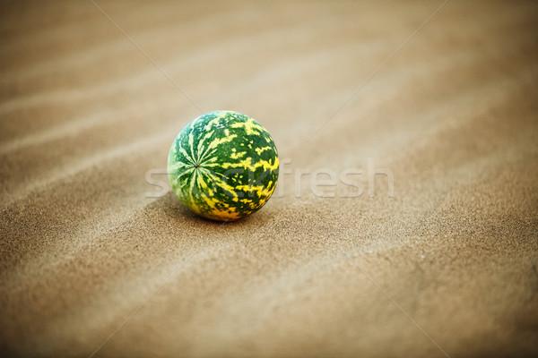 Desert melon (Citrullus colocynthis) on sand Stock photo © pzaxe