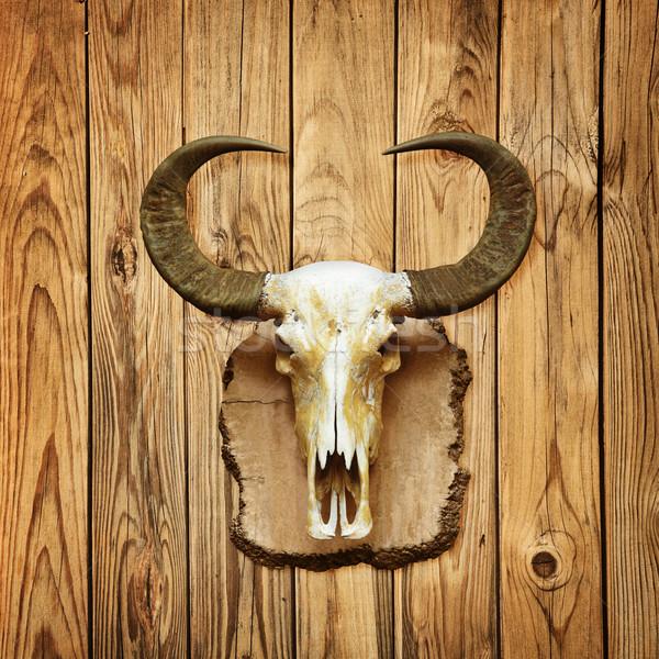 Crânio parede velho enforcamento fundo Foto stock © pzaxe