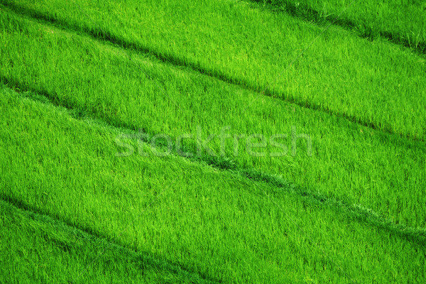 Rice fields. View from above Stock photo © pzaxe